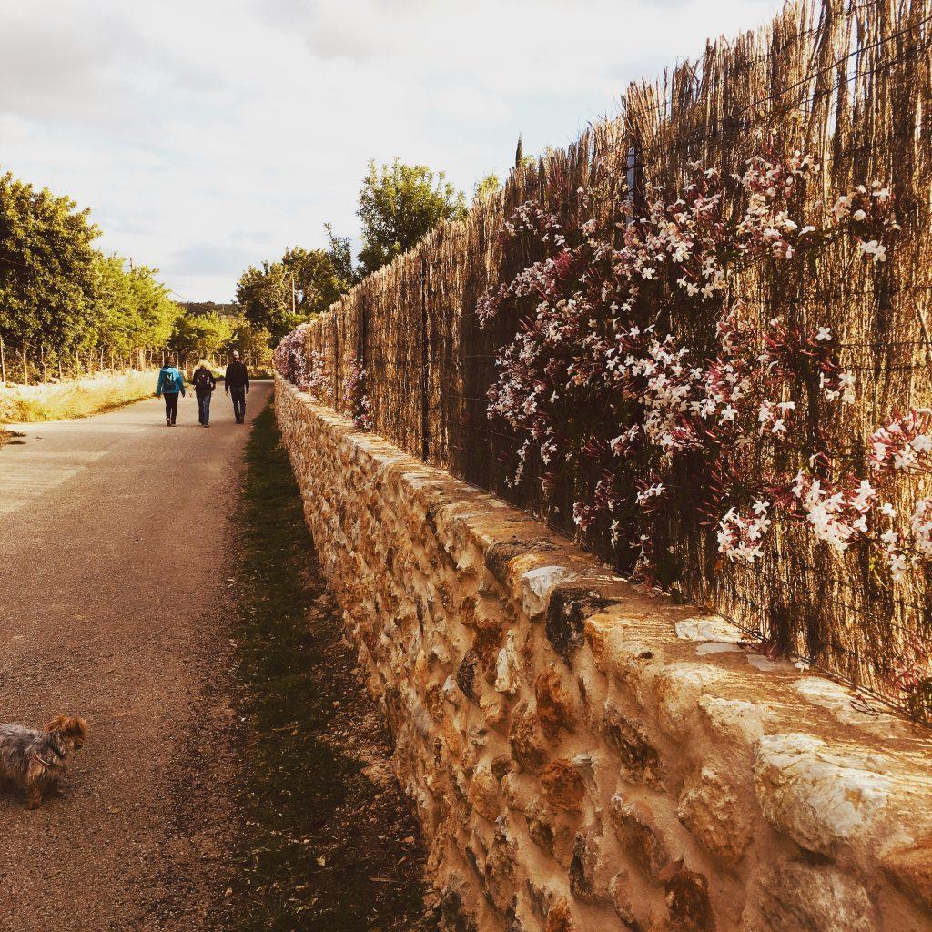 santa-maria-trekking-mallorca-hiking-blog