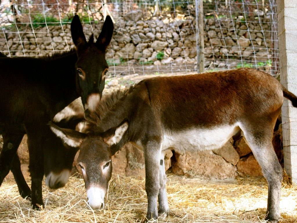 Finca-son-Pol-farm-Tramuntana-Blog