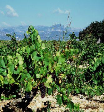 Son-Roig-vineyard-Algaida-Majorca-mallorca-vinos-blog-bio-naturales