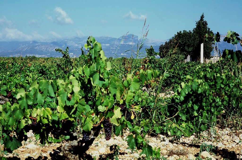 Mallorca and its wines