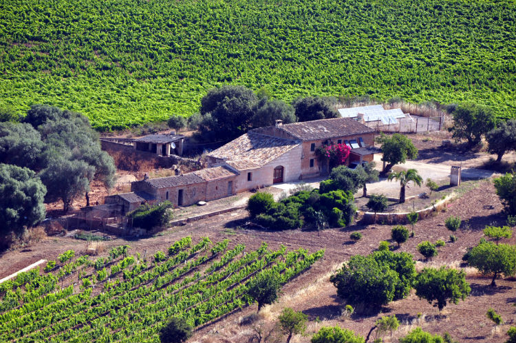 Favourite wines and wineries in Mallorca